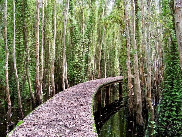 Vào mùa khô, lá tràm rụng đầy trên con đường bê tông này. Đi trong rừng tràm, chỉ có tiếng lá khua xào xạc và tiếng sột soạt của bàn chân đạp trên lá khô. Lòng du khách cảm thấy yên bình đến lạ.