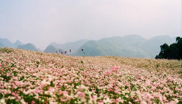 Cánh đồng hoa kéo dài tưởng như vô tận. Ảnh: Binh Minh Nguyen Huu/flickr.com