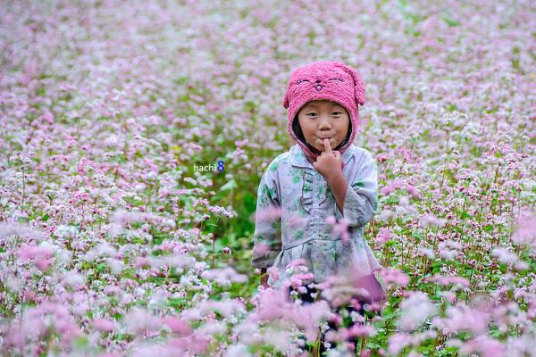 Em bé giữa cánh đồng hoa. Ảnh: Ngô Huy Hòa (hachi8)