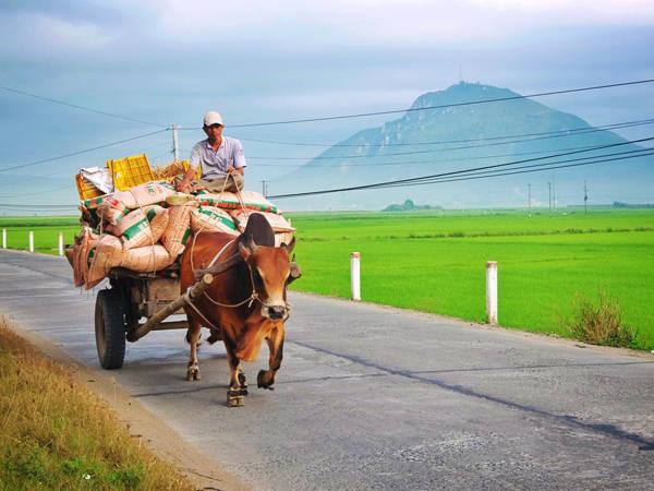 Khung cảnh bình yên, hiền hòa của đất và người Phú Yên. Ảnh: Thiện Nguyễn
