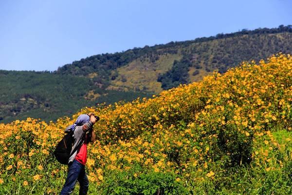 Hoa dã quỳ đã trở thành nguồn cảm hứng của rất nhiều tay săn ảnh và các bạn trẻ yêu thích du lịch bụi. Ảnh: Quỷ Cốc Tử