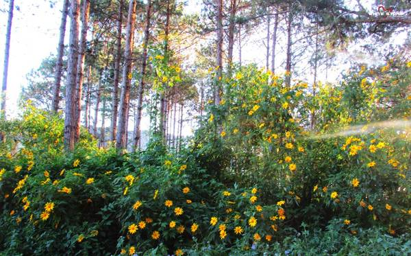 Loài hoa giản dị nhưng khiến bao lữ khách phải mê đắm. Ảnh: dongthoigian.org