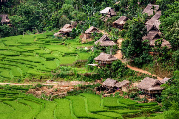 Những nếp nhà sàn nguyên sơ của người Thái tại Kho Mường - Ảnh: Thúy Quỳnh