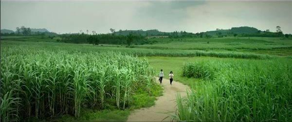 khung-canh-dong-que-phu-yen-dep-binh-di-trong--toi-thay-hoa-vang-tren-co-xanh-ivivu-123