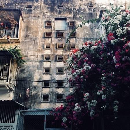 Một góc chung cư cũ e ấp đằng sau giàn hoa giấy (Nguồn IG @cuncam11).