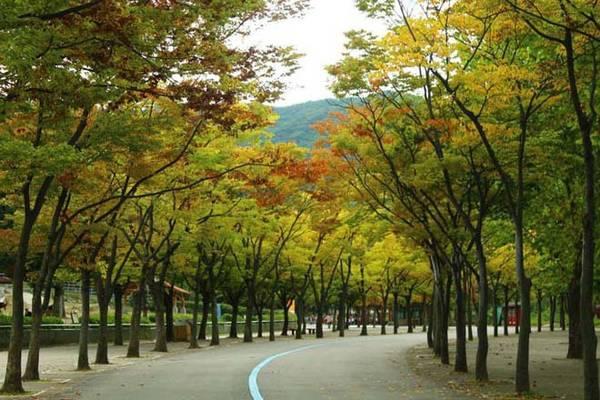 Những địa điểm tuyệt vời ngắm lá vàng mùa thu lý tưởng khi du lịch Seoul
