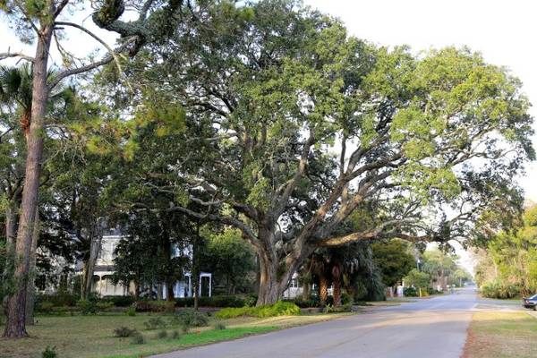 Những hàng cây sống sót sau các cơn bão dữ ở Apalachicola - Ảnh: sweetsoutherndays