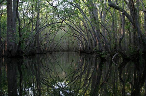 Một khúc sông huyền ảo ở Apalachicola - Ảnh:visittallahassee8