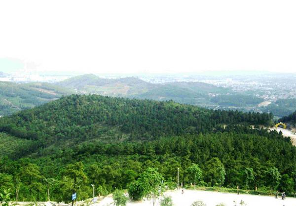 Rừng thông như tấm thảm xanh mát phía trước chùa - Ảnh: N.T.Lượng