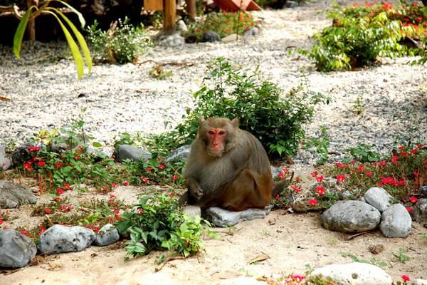 Khỉ sinh sống trên đảo. Ảnh: anhp