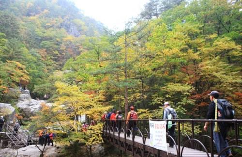 Vẻ đẹp mùa Lá Đỏ ở Hàn Quốc tuyệt đẹp vô cùng