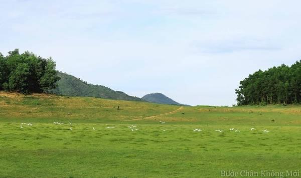 Đàn cò trắng tung cánh bay đi tìm chỗ kiếm ăn mới trên những đồi cỏ xanh bạt ngàn.