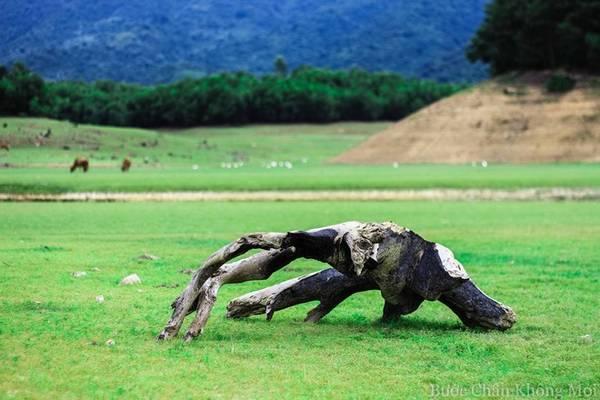 Những cây gỗ nằm rải rác trên đồng cỏ xanh như một tác phẩm nghệ thuật sắp đặt.