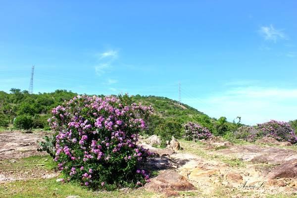 Phuot-Phan-Dung--diem-vang-tren-cung-trek-dep-nhat-Viet-Nam-ivivu-2
