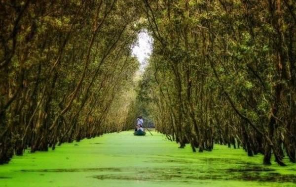 Khoảng rộng bao la của rừng tràm Trà Sư. Ảnh : Chinniplus.