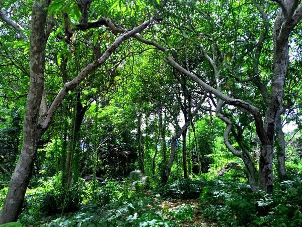 Trên hòn là một hệ thực vật phong phú với rừng cây xanh lâu năm tỏa bóng mát thành nhiều hình thù đẹp mắt, tạo cảm giác như đang lạc vào một khu rừng thực sự