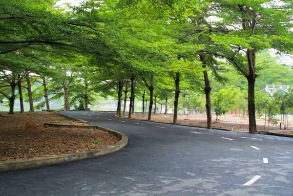 Con đường rợp lá bay như trong phim Hàn Quốc. Ảnh: Du Lịch Sinh Thái Thủy Châu