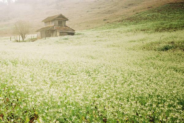 Khung cảnh tuyệt đẹp tựa như trong câu chuyện cổ tích thần tiên. Ảnh: Yen Nguyen/flickr.com
