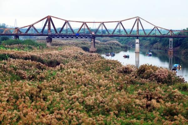 Những ngày này, có dịp đi qua cầu Long Biên ai cũng có thể bắt gặp khung cảnh đẹp mắt của bạt ngàn cỏ lau trắng, vàng hai bên bờ sông.