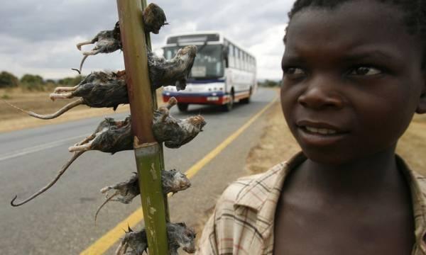 Một cậu bé bán những chú chuột đã được luộc chín trên đường tại thủ đô Malawi, Lilongwe. Ảnh: Thomas Mukoya / Reuters