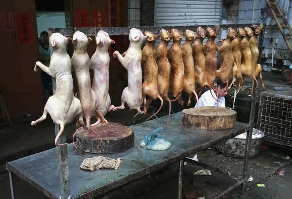 Lễ hội thịt chó diễn ra thường niên tại Ngọc Lâm, Quảng Tây, Trung Quốc gây ra nhiều tranh cãi bởi những người yêu động vật trên toàn thế giới. Ảnh: China Stringer Network / Reuters