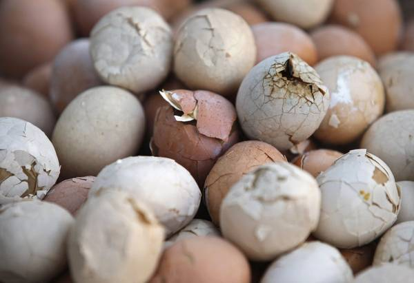 Trứng luộc trong nước tiểu trẻ em là món ăn có phần kì lạ, nhưng rất phổ biến ở vùng Chiết Giang, Trung Quốc. Ảnh: Aly Song / Reuters