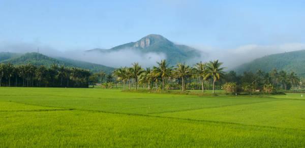 Đồng lúa Chí Thạnh (huyện Tuy An) Ảnh: Dương Thanh Xuân