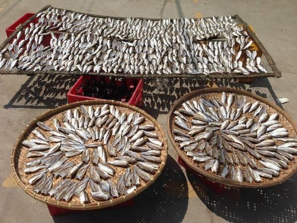Lang thang vào khu dân cư, tìm hiểu về cuộc sống của những người làm nghề chài lưới, bạn dễ dàng bắt gặp những mẹt cá phơi khô của người dân đảo.