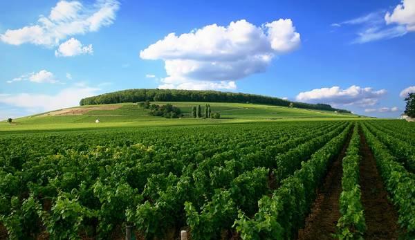 Côte d'Or, Burgundy, Pháp: Với những vườn nho có lịch sử lâu đời, Côte d'Or là vùng làm rượu vang nổi tiếng nhất Burgundy, hút khách du lịch từ khắp nơi trên thế giới. Nơi này được công nhận là Di sản thế giới vào tháng 7/2015. Cách Paris khoảng 3 tiếng đi xe, đây là nơi lý tưởng để du khách tản bộ, đạp xe thăm quan, thưởng thức rượu vang và ẩm thực địa phương. Ảnh: Winefolly.