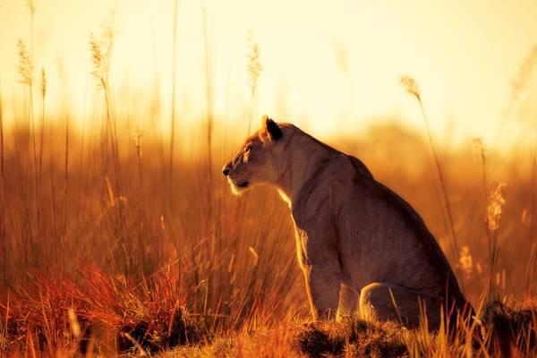 Châu thổ Okavango, Botswana: Đây là một trong số ít vùng trên trái đất mà bạn có thể ngắm nhìn 5 động vật điển hình của châu Phi: voi, sư tử, trâu rừng, báo và tê giác. Đi thuyền trên vùng nước nông, ngắm nhìn động vật hoang dã giữa khung cảnh thiên nhiên hùng vĩ, khoáng đạt là một trải nghiệm khó quên. Ảnh: National Geographic.