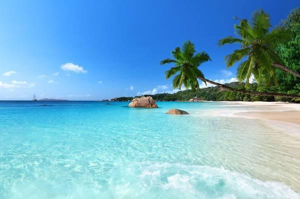 Seychelles: Nằm ngoài khơi Kenya, quần đảo Seychelles có 115 hòn đảo trù phú. Sáu công viên biển quốc gia được bảo vệ nghiêm ngặt ở Seychelles là nhà của những loài rùa, cá heo quý hiếm, cùng hàng nghìn loài cá. Đến với khu bảo tồn Vallée de Mai, du khách sẽ có cảm tưởng như lạc vào thời tiền sử. Ảnh: National Geographic.