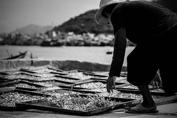 Người dân phơi cá ở cảng Hòn Rớ, Nha Trang, Khánh Hòa. Ảnh: Au Eightx/Picfair.