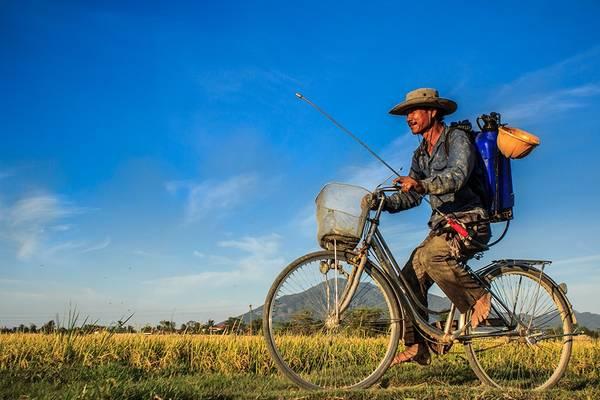 Người đàn ông trên chiếc xe đạp trở về nhà trong ráng chiều sau một ngày lao động trên cánh đồng. Ảnh: Wolf/Picfair.
