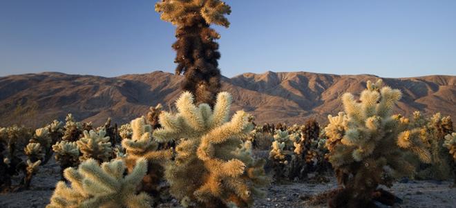 Công viên quốc gia Joshua Tree, Mỹ: Sự tĩnh lặng của sa mạc sẽ tràn vào tâm hồn bạn ngay khi tới công viên quốc gia này. Những cây Joshua khổng lồ đem lại cho công viên này một vẻ đẹp khác lạ, khiến bạn có cảm giác như lạc vào một thế giới khác. Chẳng còn gì tuyệt bằng được cắm trại ở đây buổi đêm và ngắm nhìn bầu trời sao lộng lẫy.