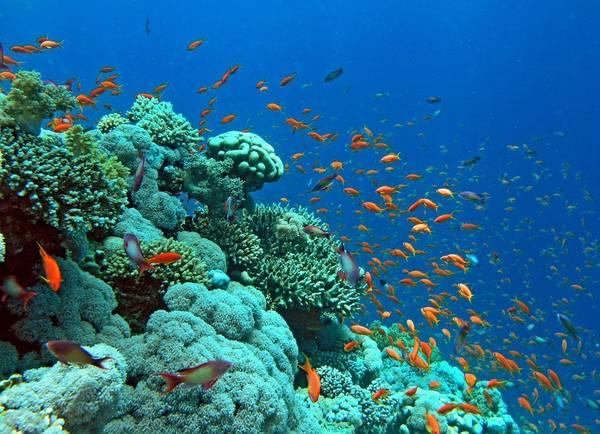 Lặn ngắm hệ sinh thái dưới biển Đỏ, Ai Cập: Từng là một làng chài bình yên, giờ đây Hurghada đã trở thành điểm đến hút khách nhờ những tour lặn biển độc đáo. Các đảo và rạn san hô chỉ cách Hurghada vài tiếng đi thuyền. Các vùng nước nông với hệ động vật biển phong phú đem lại cho du khách một trải nghiệm khó quên. Ảnh: Therichest.