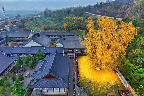 Cây rẻ quạt 1.400 năm tuổi này mọc cạnh đền Gu Guanyin thờ Phật ở núi Zhongnan, tỉnh Thiểm Tây, Trung Quốc.
