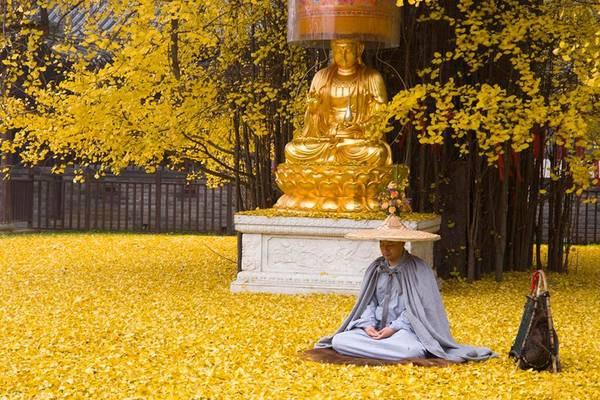 Cảnh tượng những tán lá vàng buông quanh tượng Phật thật kỳ ảo.