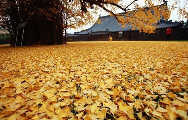 Thảm lá phủ kín mặt đất.