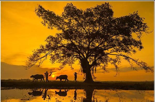 """Tác phẩm """"Làm đồng"""" do Nguyễn Mạnh Tuấn chụp tại một làng quê ở Quảng Bình."""