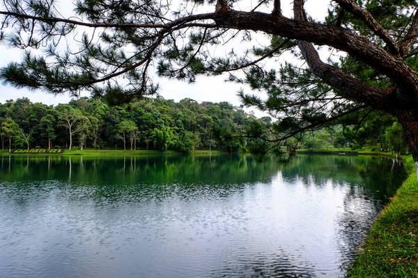 Khu du lịch thác Dambri là điểm dừng chân cuối cùng trong ngày của chúng tôi, trung tâm của khu du lịch là một hồ nước tuyệt đẹp với cây cối bao xung quanh rất thơ mộng và mát mẻ. Trên hồ có các dịch vụ như đạp vịt, chèo thuyền…