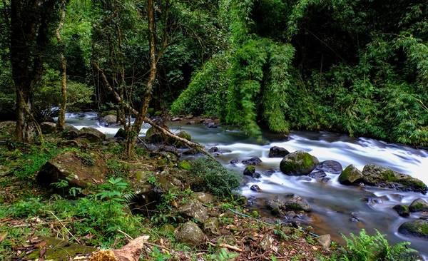 Dọc đường đi bộ từ thác Dasara lên thác Dambri có con suối rất đẹp, nước trong vắt và mát lạnh.