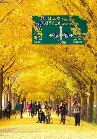 Với vẻ đẹp lãng mạn và ấn tượng, bản thân con đường đã trở thành một điểm tham quan hút khách.