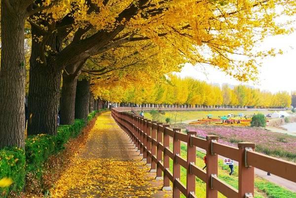 Một bên đường có lối đi tản bộ lãng mạn, cho du khách chiêm ngưỡng hàng rẻ quạt trải dài và hít thở không khí trong lành.