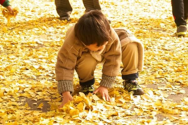 Một cậu bé thích thú đùa nghịch với lá cây.