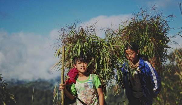 Trẻ em gánh cỏ từ sáng sớm dưới chân núi.