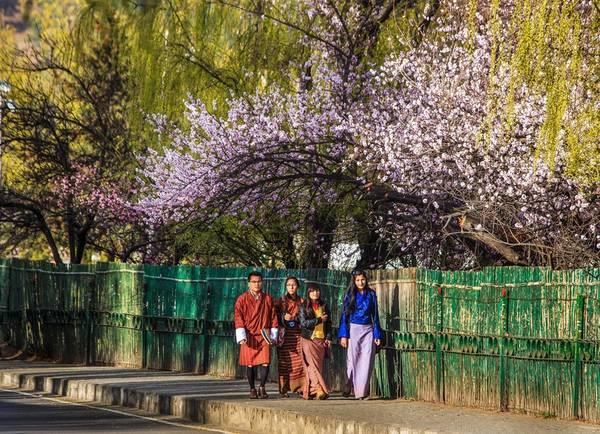 Khung cảnh như trong thần thoại với gốc anh đào cổ thụ, các cô gái mặc trang phục truyền thống Kira nền nã. Chàng trai lịch lãm trong bộ Gho. Ảnh: Hải Piano.
