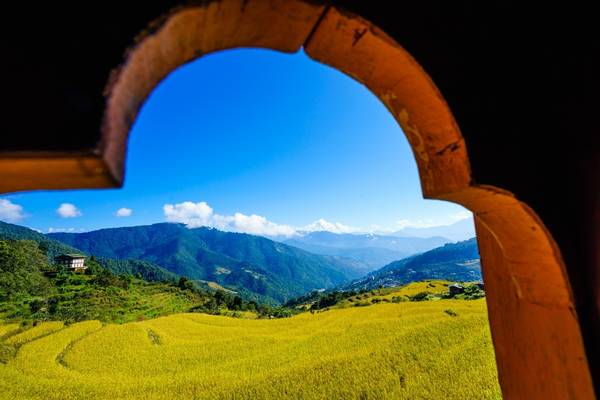 Thung lũng Punakha vào mùa lúa chín. Ảnh: Nguyễn Thanh Tùng.