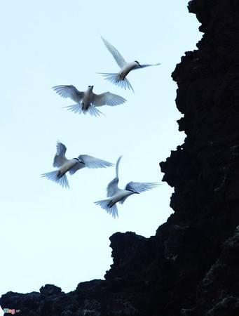 Chim hải âu ríu rít bay về tổ ấm.