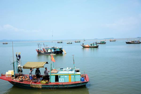 Những con thuyền đánh cá đậu ở bến