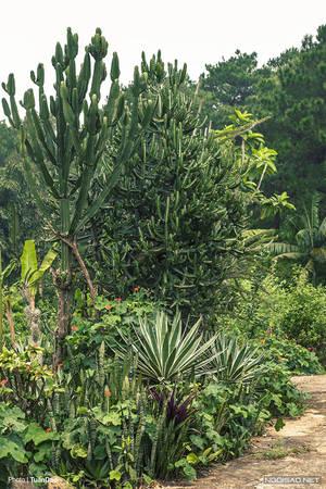 Bên ngoài đường vào, được trồng rất nhiều loại cây xương rồng cao đến hơn 2 m, xen kẽ nhau khiến nhiều người cảm thấy tò mò.